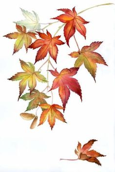 18 ideas maple tree drawing watercolor painting fall leaves for 2019 Botanical Drawings, Botanical Art, Watercolor Leaves, Watercolor Paintings, Watercolor Wallpaper, Tattoo Watercolor, Maple Leaf Drawing, Autumn Leaf Drawing, Maple Tree Tattoos