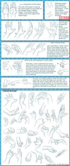 Anatomy of the Hand. Drawing Reference. 各种手部动作