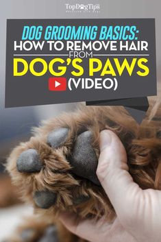How To Remove Hair From Dog Paws (Video) & Why You Must Do That.