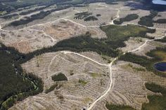 The Canadian Logging Industry's Spin Cycle | NRDC Digital Transitions, Forest Ecosystem, Environmental Degradation, Natural Resources, The Expanse, Climate Change, Habitats, Spinning, City Photo