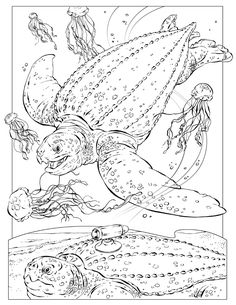 Coloring Sheets Sea Turtle