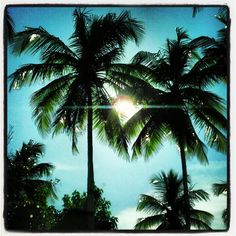 Coconut Palm Trees    http://www.coconutwire.vi/take-me-there/