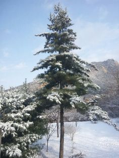 A snow in the Bukhansan Mountain, just a 15 minute drive from downtown, Seoul, Sourh Korea, February 2014