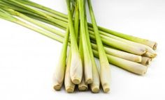 Anticancer activity of lemongrass oil Lemongrass Oil, Lemongrass Essential Oil, Essential Oils, Diy Mosquito Repellent, Natural Mosquito Repellant, Bug Off, Thing 1, Lemon Grass, Animals For Kids