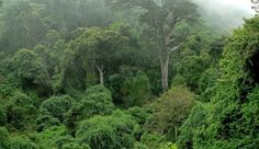Knysna Forest in Knysna, Garden Route. Across Africa are only a handful of sheltered, remote pockets of Afromontane forest; Knysna, South Afrika, African Jungle, Garden Route, Out Of Africa, Africa Travel, Places To Go, Beautiful Places, National Parks