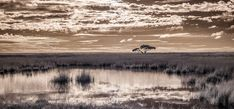 Beautiful Wall Art Print of the Etosha Landscape in Namibia in Black and White. Our beautiful selection of art papers and canvas gives you endless choices. Framed and mounted options arrive ready to hang. A Print that suits casual, modern and contemporary home decor schemes.