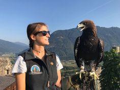 Falkner sind auf das Abrichten und die Pflege der Tiere spezialisiert. Verfolgen Sie die beeindruckende Luftakrobatik der Vögel auf der Adlerarena Burg Landskron, erfahren Sie Wissenswertes und halten Sie Ihre Erinnerungen bildlich fest. Das kompetente Fachpersonal steht Ihnen natürlich gerne für weitere Fragen zu Verfügung.  #kärnten #carinthia #austria #österreich #adler #eagle #animals #tiere Birds Of Prey, Bald Eagle, Animals, Lounge Music, Animales, Animaux, Animal, Animais