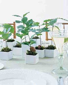 Budding seedlings placed in sleek sake cups get grouped together on tables for a centerpiece and favor display full of visual interest. Succulent Favors, Succulent Centerpieces, Succulent Care, Centrepieces, Centerpiece Ideas, Diy Wedding Favors, Wedding Themes, Wedding Ideas, Wedding Decorations