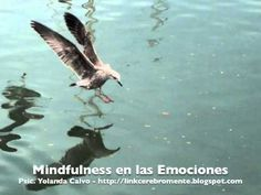 Mindfulness en las Emociones - YouTube