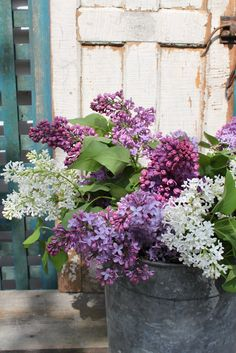 lilacs. The fragrance is quintessentially May