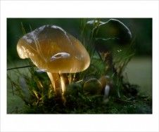 Fischli/Weiss 'Untitled (Mushroom)' (2006)