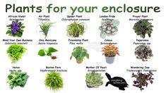 Plants for your box turtle enclosure Horsefield Tortoise, Tortoise House, Tortoise Habitat, Tortoise Table, Sulcata Tortoise, Tortoise Tattoo, Giant Tortoise, Turtle Care, Pet Turtle
