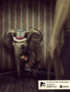 This is why I will NEVER go to the circus or take my own child.