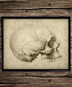 vintage skull anatomy vintage prints anatomy prints office decor home decor anatomy home office