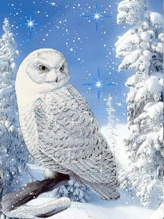 ca bouge - Page 69 Beautiful Owl, Animals Beautiful, Owl Bird, Pet Birds, Animals And Pets, Cute Animals, Owl Artwork, Owl Wallpaper, Owl Pictures