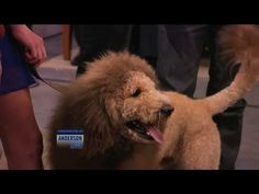 Have You Seen the 'Lion Dog'?