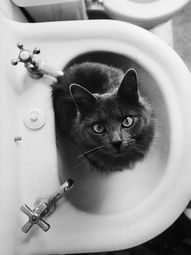 Touch that faucet and die! A face like my Mistoffolees! I miss my kitty girl! RIP!