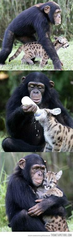 We can learn from the animals. :)
