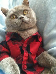 Flannel kitteh from Seattle.  Grunge is not dead!