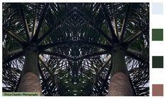 #Nature #Chandigarh #YinYang #PriyaChanderPhotography #YinandYang #Springsummer #Photography #Trees #TreePhotography #PhotographofTrees #CityBeautiful #India #Fashioninspiration #fabricprints #colorinspiration #colortrends #wallpaper #art #printedfabric #natureinspiration #patterns #fashionforecast #trends