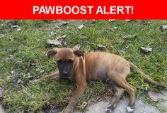Please spread the word! Reggie was last seen in Houston, TX 77028.    Nearest Address: 7831 Green River Dr, Houston, TX 77028