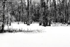 It's Not Snow Landscape Photography Nature Home Decor by McAnany
