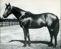 Carry Back Carry Back, Carry On, Unusual Names, Derby Winners, Thoroughbred Horse, Racehorse, Three Year Olds, Show Horses, Kentucky Derby