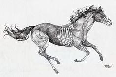 Grey-ink running half-skeleton horse tattoo design by Painting Gael Dog Skeleton, Skeleton Drawings, Skeleton Tattoos, Horse Drawings, Cameo Tattoo, F Tattoo, Tattoo Drawings, Bone Tattoos, Head Tattoos