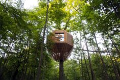 The Tiny Tree House Sits Within A Forest In France