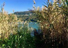 Magliaso: Einzigartiges Seegrundstück mit direktem Seezugang Vineyard, Plants, Outdoor, Duplex House, Real Estate Agents, Lake Garda, Villas, Switzerland, Outdoors