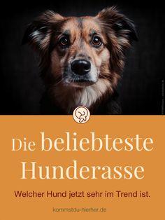 Weder Dackel noch Schäferhund sind die beliebteste Hunderasse der Deutschen 2020. Das aktuelle Umfrageergebnis ist überraschend! Hunderassen   Welche Rasse passt zu mir   Stadthunde   #Hundeverhalten #Hundeerziehung #Hunderasse #Satire #Humor Dogs, Movies, Movie Posters, Satire, Kind, Flat, Humor, Profile, Dog Nails