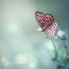Moth, Insects, Pictures, Animals, Photos, Animales, Animaux, Animal, Animais