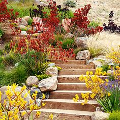 Dozens of Water-Wise Plants That Go Way Beyond Succulents - Sunset Velvety kangaroo paws (Anigozanthos 'Orange Cross' and Bush Gems series) add spicy color against golden grasses in a garden in Tiburon, California, designed by Arterra Landscape Architects Australian Garden Design, Australian Native Garden, Drought Resistant Plants, Drought Tolerant Landscape, Drought Resistant Landscaping, Landscaping Plants, Front Yard Landscaping, Landscaping Ideas, Low Water Landscaping