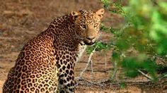 yala national park - Bing Images