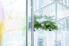 Vase Seychellen White, beplant met Araucaria