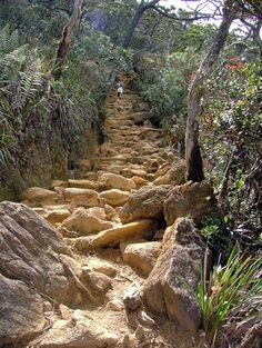 Google Image Result for http://www.adventurealive.com/_files/image/MtKinabalu3.jpg
