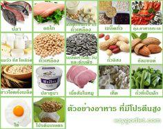 ปริมาณโปรตีนในอาหาร สามารถเปรียบเทียบแคลอรี่ และสารอาหารอื่นๆ ทั้งอาหารแบบไทยๆ และต่างประเทศ เรียงลำดับอาหารที่มีโปรตีนสูงที่สุด