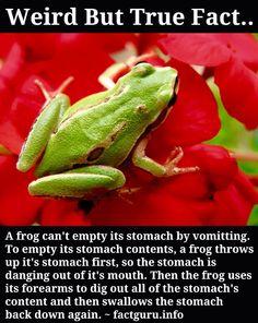 Weird frog fact....
