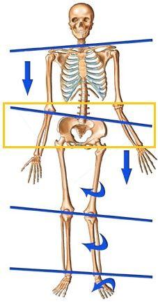 Lateral pelvic tilt - Posture Direct