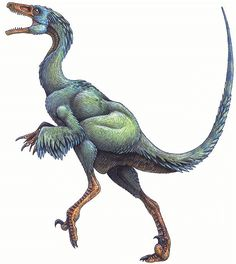 a dinosaur of the Coelurosaur and Maniraptora family of theropod Dinosaurs, the family which birds were descended from.Troodon, a dinosaur of the Coelurosaur and Maniraptora family of theropod Dinosaurs, the family which birds were descended from. Dinosaur Facts, Dinosaur Images, Dinosaur Fossils, Prehistoric World, Prehistoric Creatures, Jurassic Park, Reptiles, Mammals, Feathered Dinosaurs