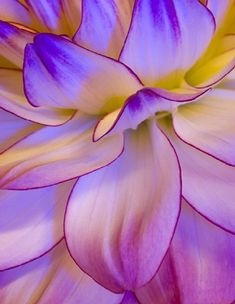 macro flowers photography | Found on pixdaus.com