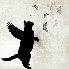 Kittens So Cute - Funny Cats Crazy Cat Lady, Crazy Cats, Gato Angel, Black Cat Art, Black Cats, Black Cat Tattoos, Image Chat, Pet Loss, Here Kitty Kitty