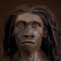 Homo erectus Lived:   Africa & Asia- 1.89 million to 143,000 years ago  the oldest proto-humans to have modern human-like body proportions; features adapted for life on the ground, H. erectus could walk and run long distances. Fossil evidence suggests they cared for the young, old and weak individuals. H. erectus is associated with the earliest handaxes, the first major innovation in stone tool technology. Fossil discoveries from China suggest he was the first species to expand beyond…