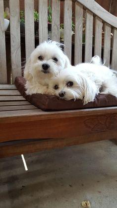 Rocco & Rosie