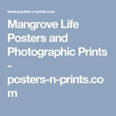 Mangrove Life Posters and Photographic Prints - posters-n-prints.com