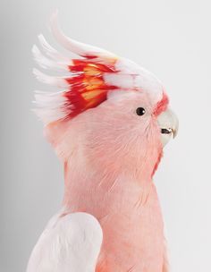 Portraits of Birds Ruffling with Personality by Leila Jeffreys