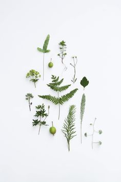 Green plant breakdown, we loved looking at beautiful images of greenery for the August 16 issue of Livingetc - Indoor Gardener Green Plants, Botanical Art, Botany, Indoor Plants, Bonsai, House Plants, Planting Flowers, Greenery, Floral Design