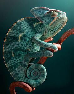 Amazing bugs, reptiles and amphibians photographed by Igor Siwanowicz Epiphany de `Blepharopsis Photography / Animales, plantas y naturaleza / Reptiles y anfibios Nature Animals, Animals And Pets, Baby Animals, Cute Animals, Forest Animals, Colorful Animals, Wildlife Nature, Baby Pandas, Tropical Animals