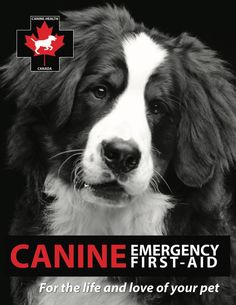 The new online 'Canine Health and Emergency First Aid Trainer' course starts October 15, with public education classes filling up for October and November.  With the largest and most comprehensive equine health and emergency first aid training programs in North America, this was a natural transition ... and the classes are a MUST for any dog owner.  Dog professional? Let's chat about you joining the team!  Dog lover? We have trainers in every province waiting to help! Online S, News Online, Emergency First Aid, October 15, Training Programs, Dog Owners, Your Pet, North America, Trainers