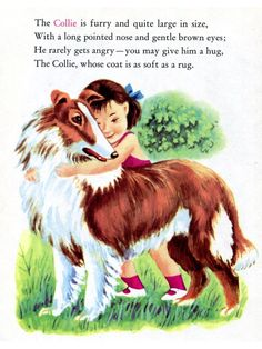 The Collie - I had, and still have, this Little Golden Book on dogs.
